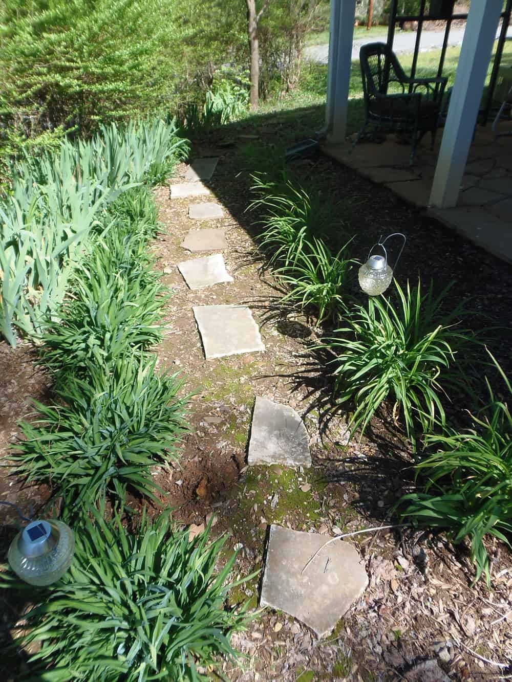 Garden Path Lined in Daylilies and Irises