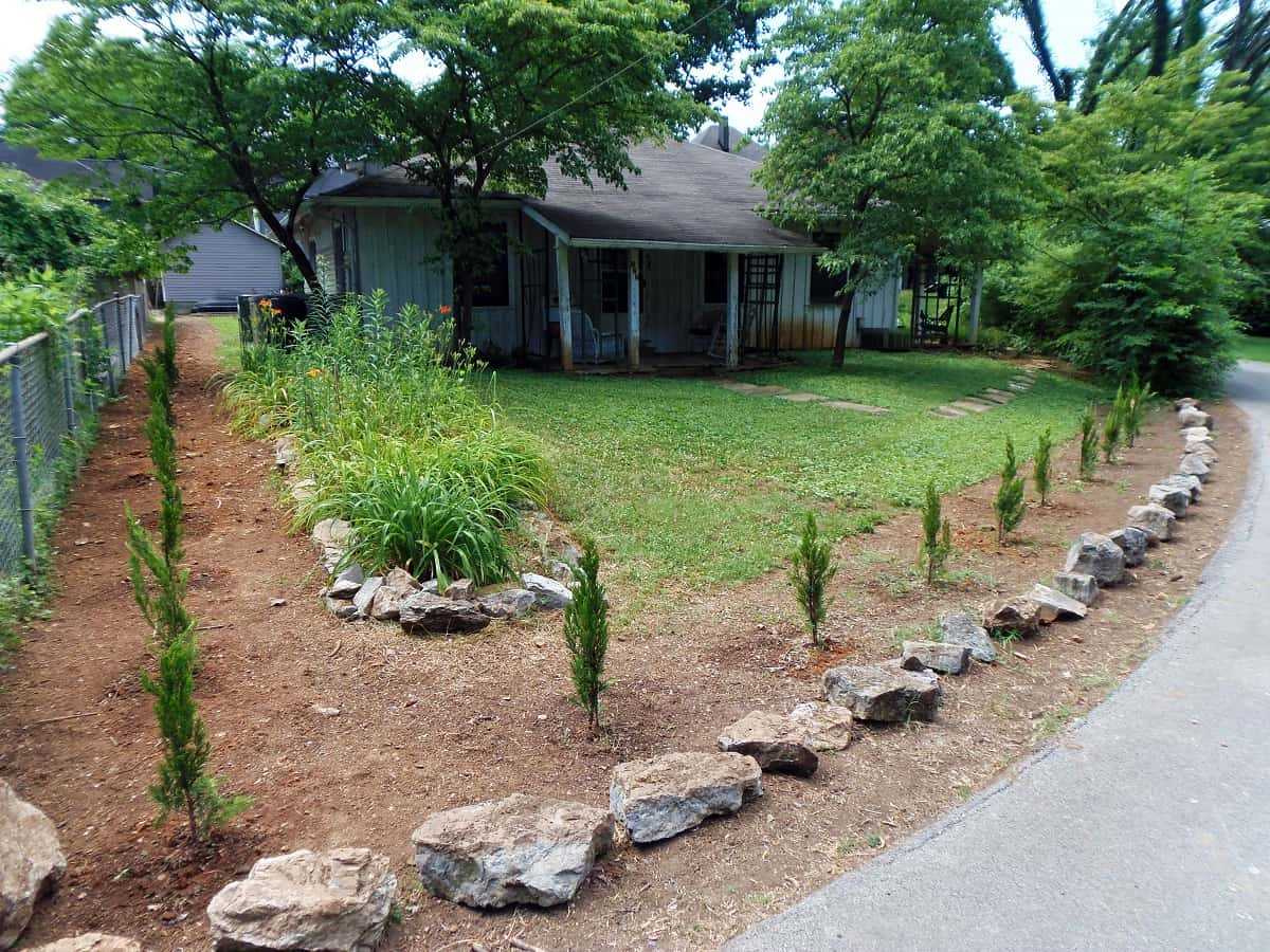 Row of Privacy Plantings Next to the Road