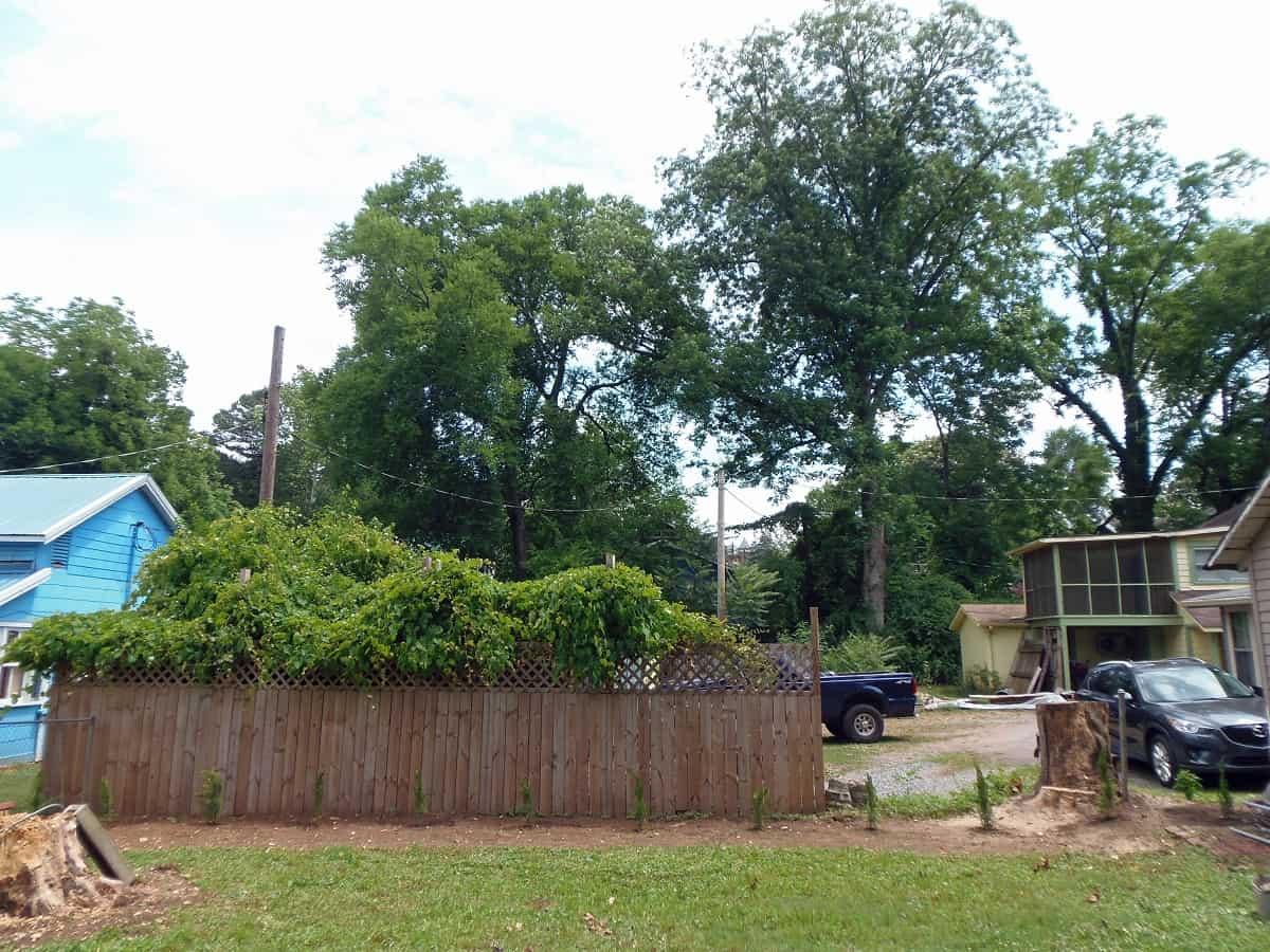 Right Side of Backyard