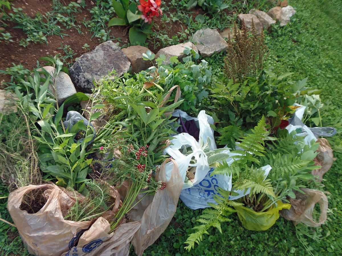 Bags of Free Plants