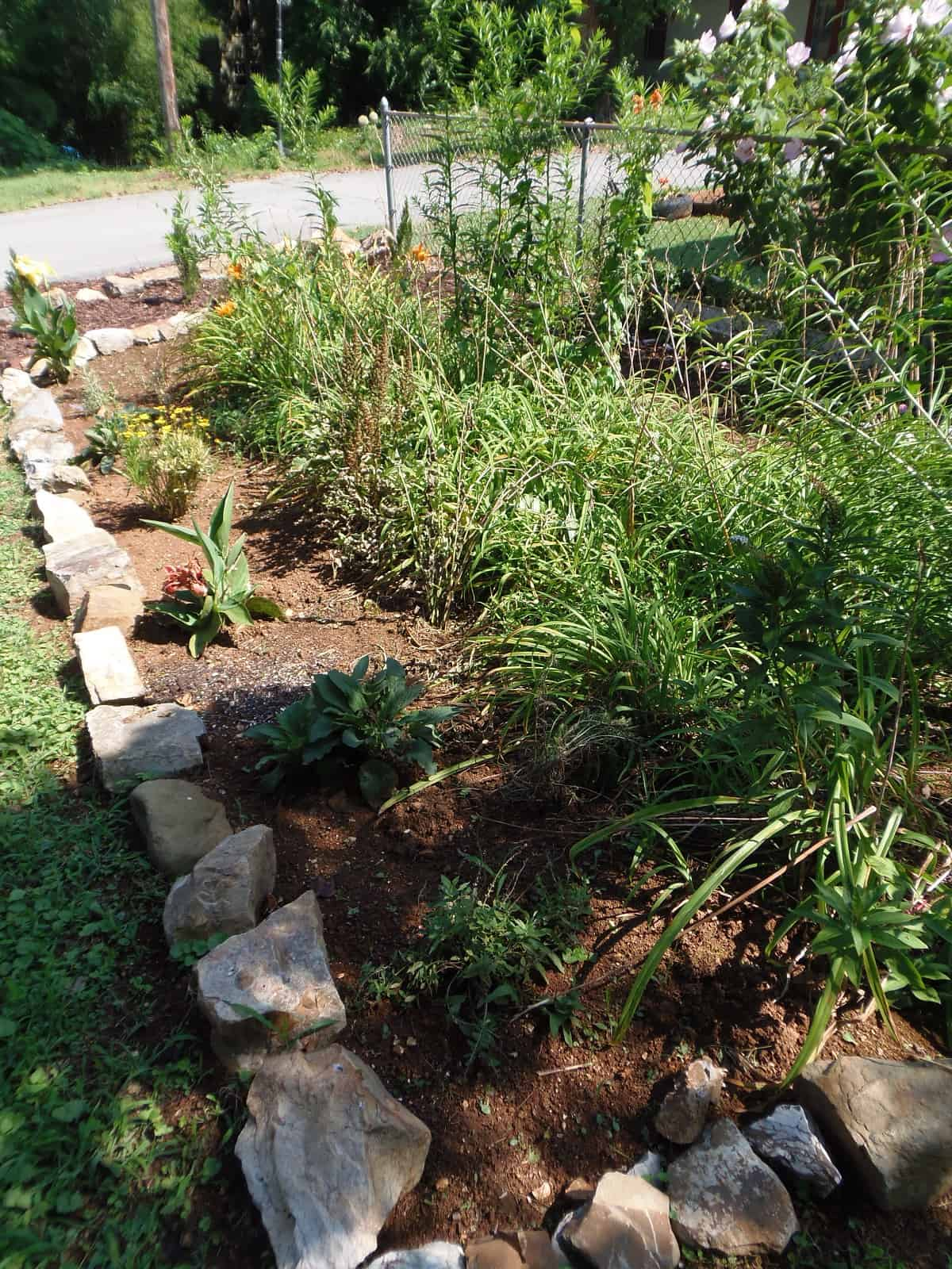 New Plants in Rock-Edged Garden