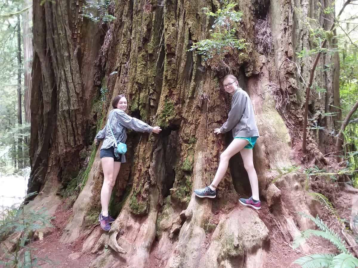 Girls Standing in Front of Tree in Avenue of the Giants
