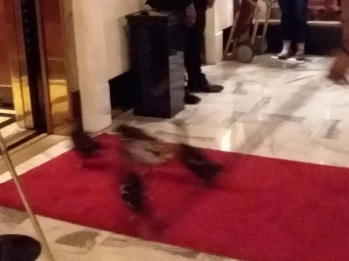 Peabody Ducks Taking Elevator
