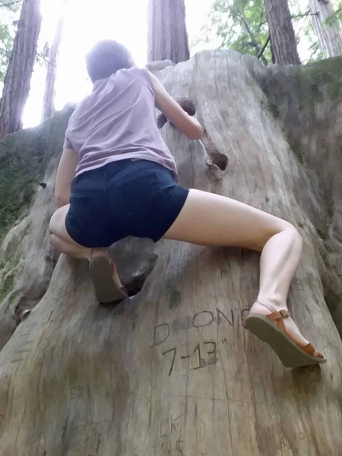 Redwood Stump With Climbing Holds