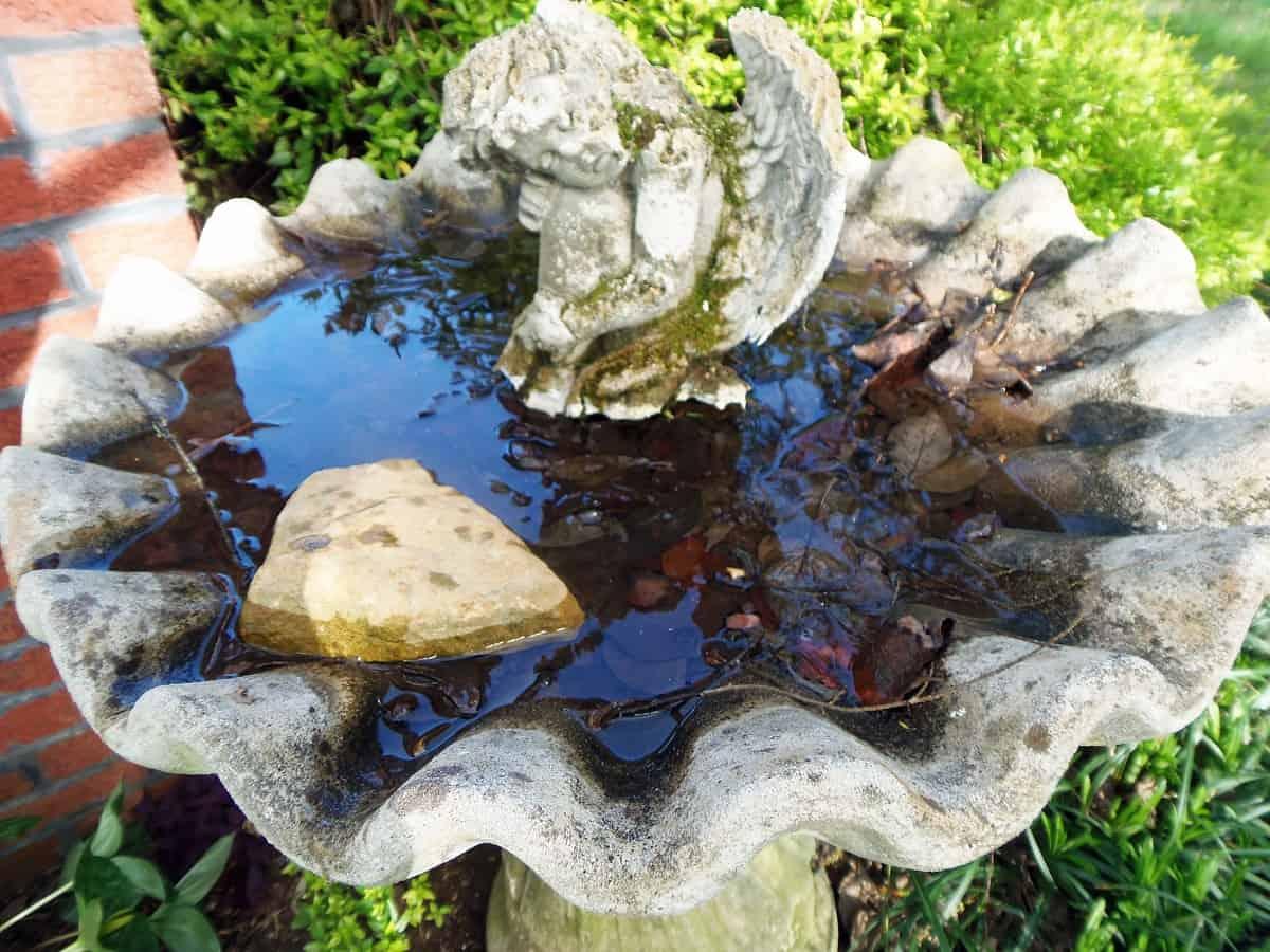 Bird Bath With Rocks for Pollinators