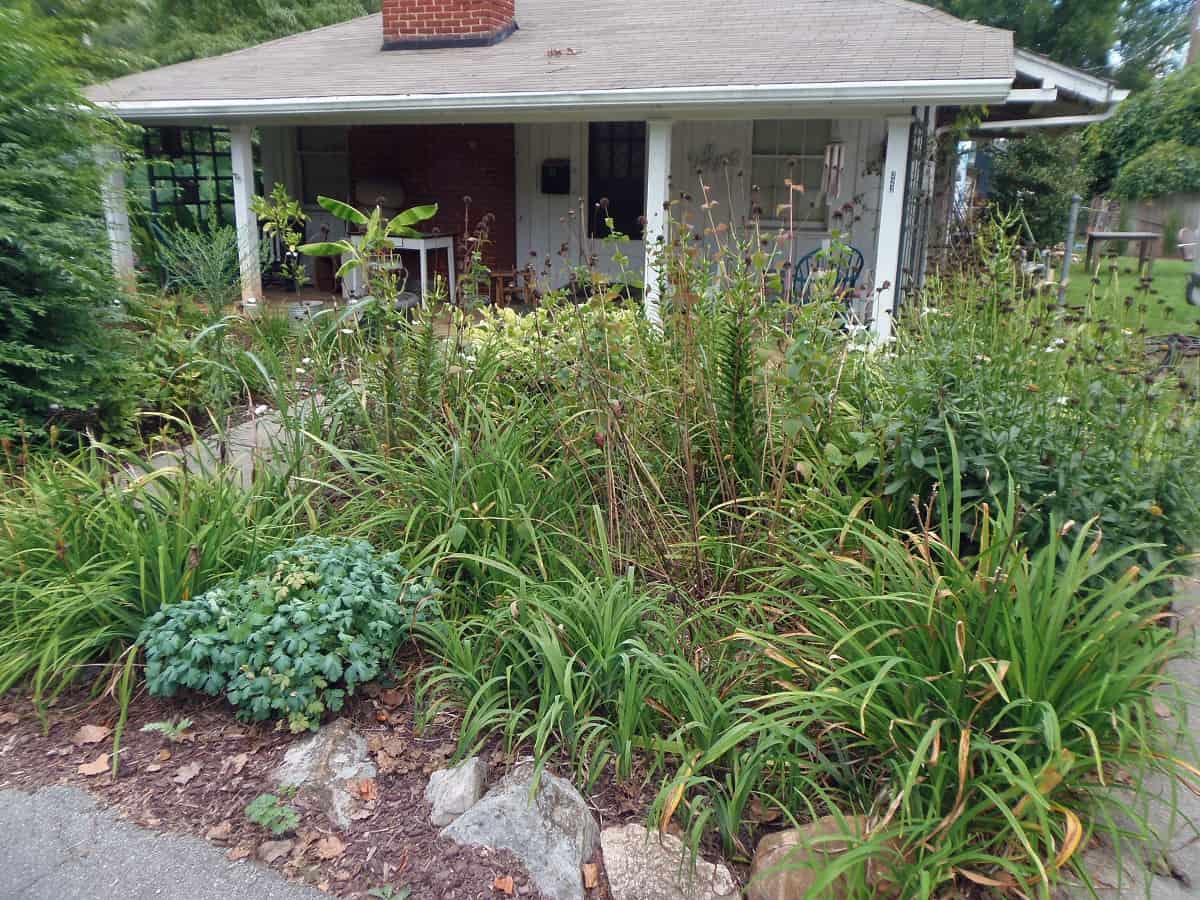 Side Garden in August