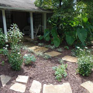 Office Garden Update: August 2020