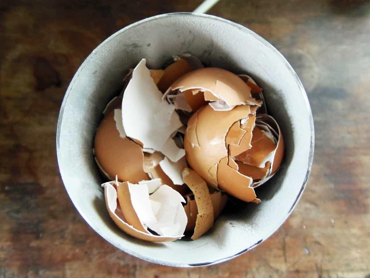 Place Eggshells in Spice Grinder