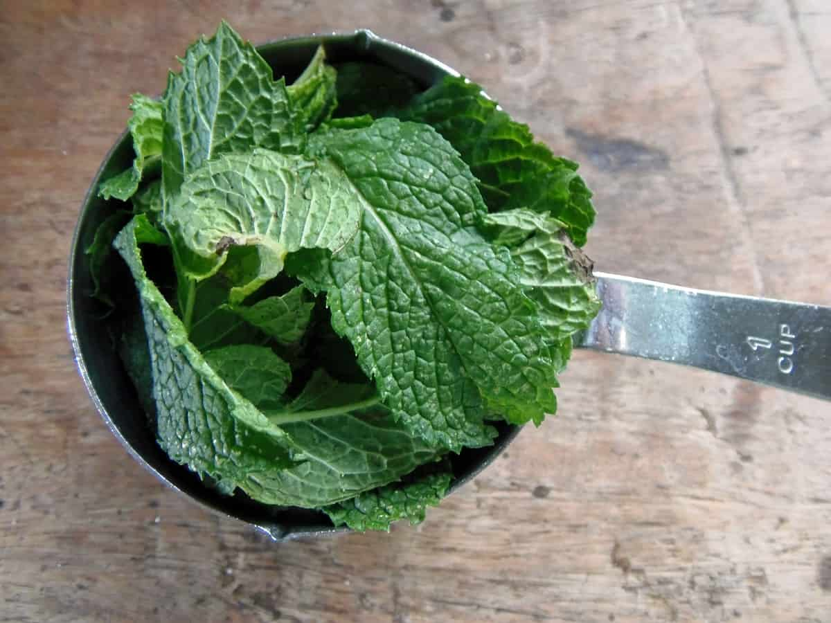 Cup of Fresh Peppermint
