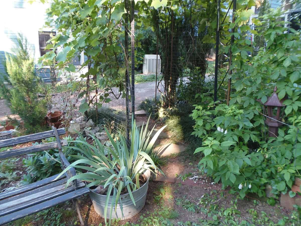 Flower Bed, Grape Arbor and Raspberry Patch