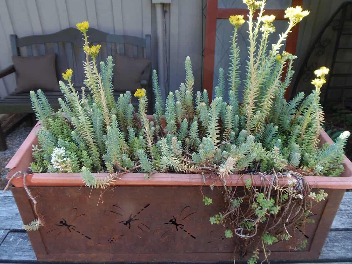 Planter Full of Succulents