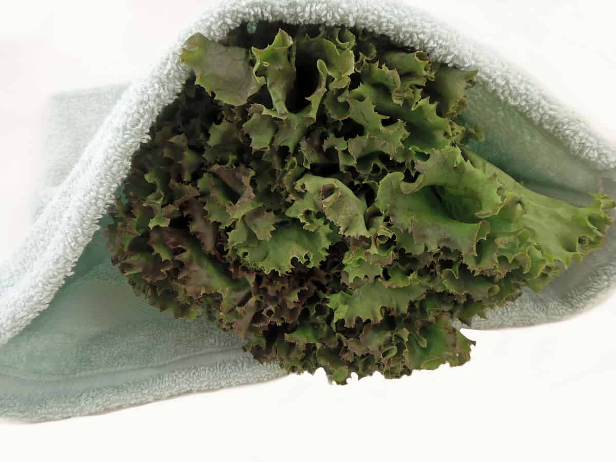 Close Up Shot of Homemade Lettuce Crisper Bag
